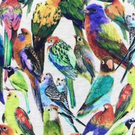 Tissu sweat oiseaux colorés envers minkee blanc - multi x 10cm