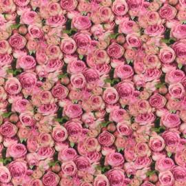 Tissu coton Boutons de Rose - rose x 10cm