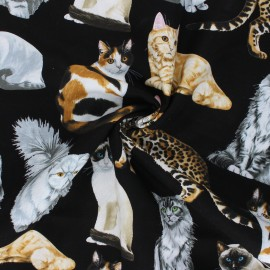 Timeless Treasures cotton fabric - black Cat Family x 10cm