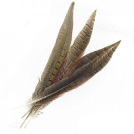 Lot 4 plumes de Faisan