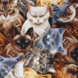 Tissu coton Timeless Treasures - Cat's eye - noir x 10cm