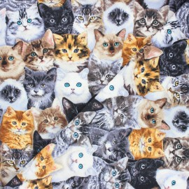 Timeless Treasures cotton fabric - multicolor Cat breeds x 10cm