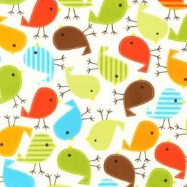 Urban zoologie birds bermuda