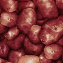Tissu Farmer's Market pomme de terre rouge x 10cm