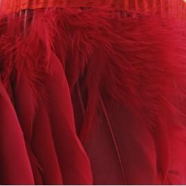 Galon Plumes Rouge  14cm x 20cm