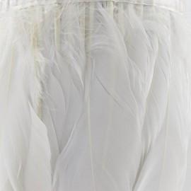 Galon Plumes Blanc 14cm x 20cm