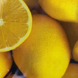 Oilcloth fabric Citron x 10cm