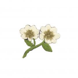 Thermocollant brodé Douceur botanique - blanc/doré