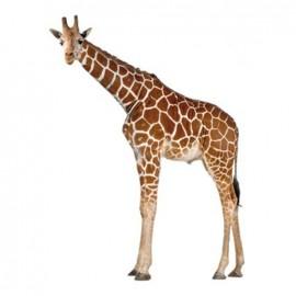 Joli fauve large iron-on patch - giraffe