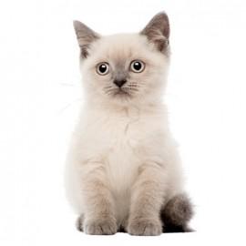 Joli fauve large iron-on patch - kitten