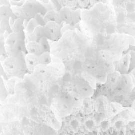 Dentelle froufrou sur ruban satin - blanc x 1m