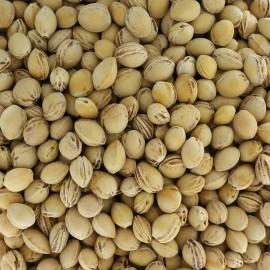 Noyaux de cerises pour rembourrage - 500g
