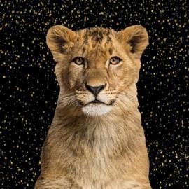 Tissu coton panneau - Lion 70cm x 140cm